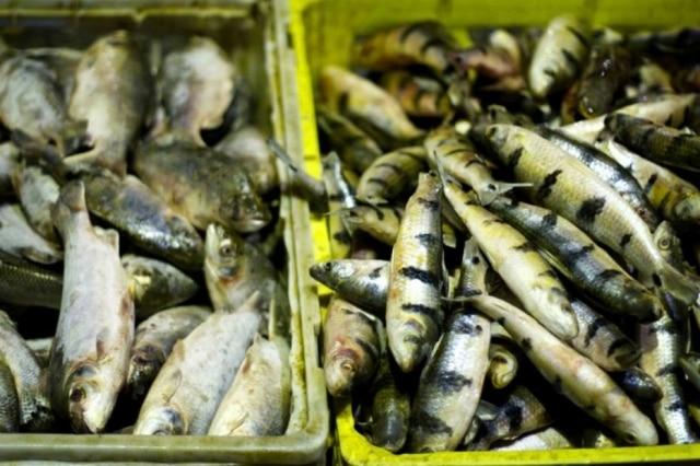 Banca de peixes no mercado Ver-o-peso, em Belém