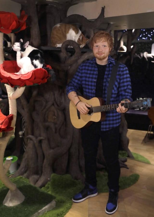 A estátua de cera de Ed Sheeran.