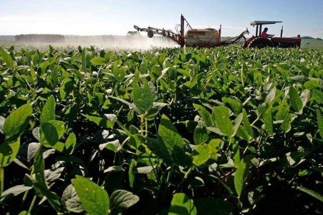 Grãos. Produção atual de 2.068 milhões de toneladas poderia alimentar a população projetada para 2050