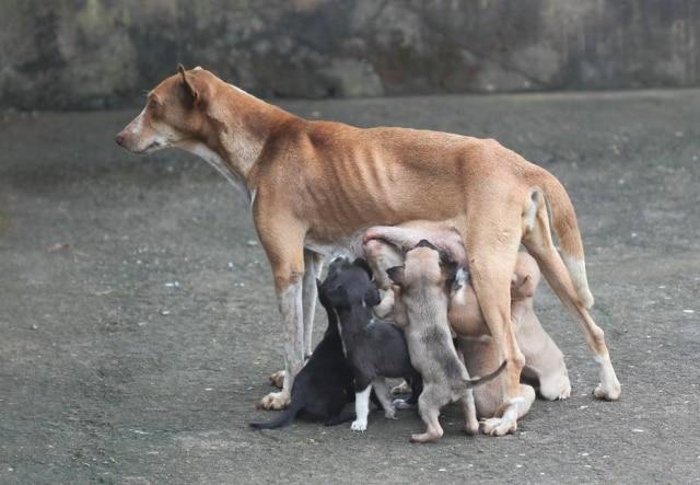 Animal teve filhotes alguns dias após ensaio ser compartilhado nas redes