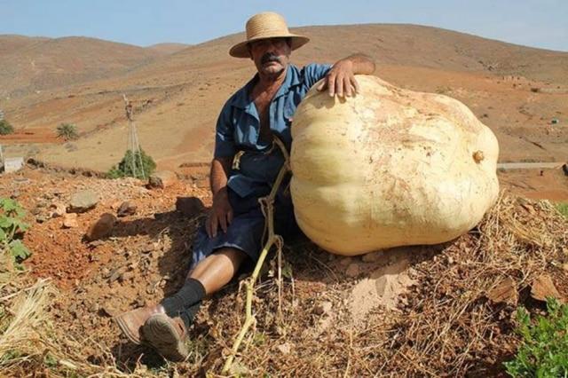 Abóbora gigante foi colhida na Espanha, e ganhou fama após o Facebook da Prefeitura de Antigua publicar a foto.
