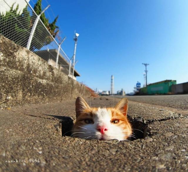 Gatos transformaram uma rua com buracos de drenagem em um parque de diversões.