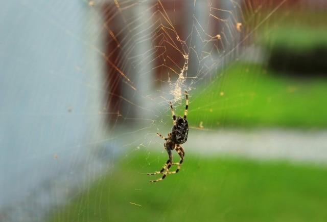 Homem que gritou por medo de aranha pediu desculpas aos policiais pelo incoveniente.
