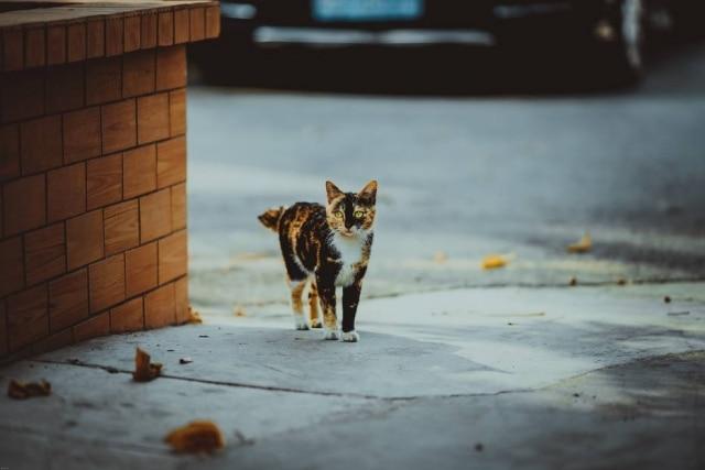 Cerca de 70 gatos estão sob os cuidados da guardiã.
