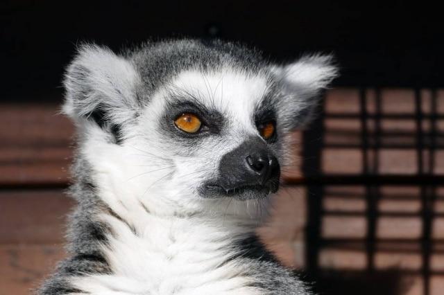 A polícia de Miami está investigando como36 animais exóticos foram furtados de um santuário por conta deum anúncio falso na internet