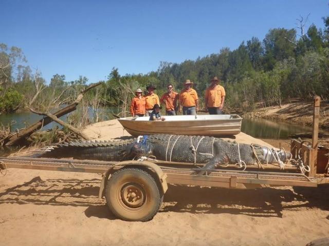 Crocodilo gigante foi encontrado em lago na Austrália.