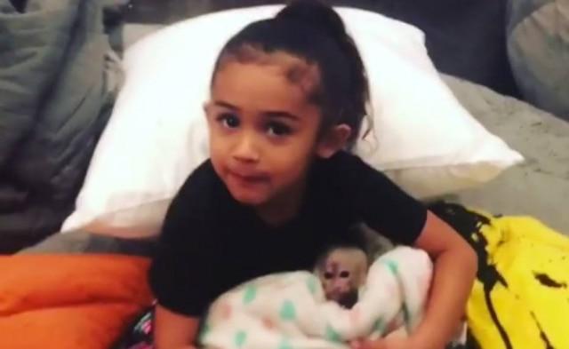 Filha do cantor Chris Brown e filhote de macaquinha