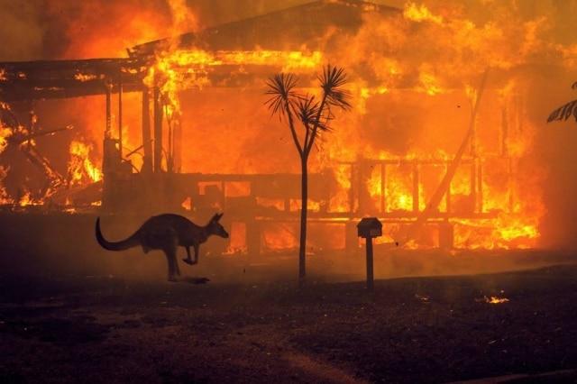 Canguru passa por casa em chamas em Lago Conjola, no Estado de Nova Gales do Sul, Austrália
