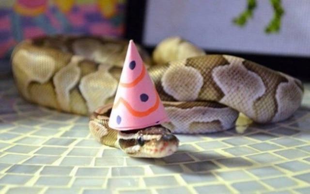 Confira como cobras podem ficar fofas