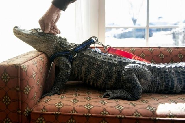 Wally foi resgatado na região de Orlando quando tinha 14 meses