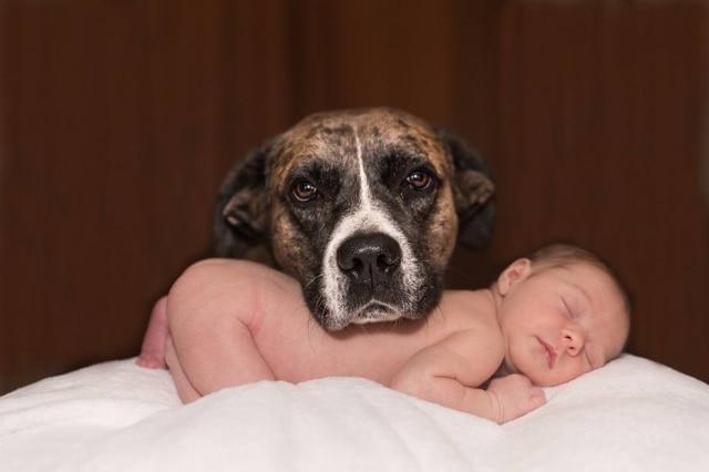 Zootecnista e especialista em bem-estar animal dá dicas para ajudar os donos a agirem da melhor maneira para manter uma convivência saudável entre a criança e o pet