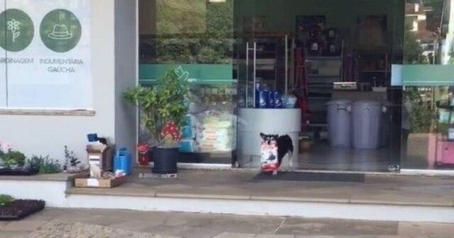 Pituco sai da loja de produtos para animais carregando sua própria ração