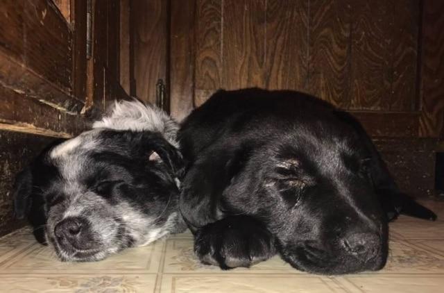 Mãe e filha se presenteiam com um cachorro e agora há dois cães na casa.