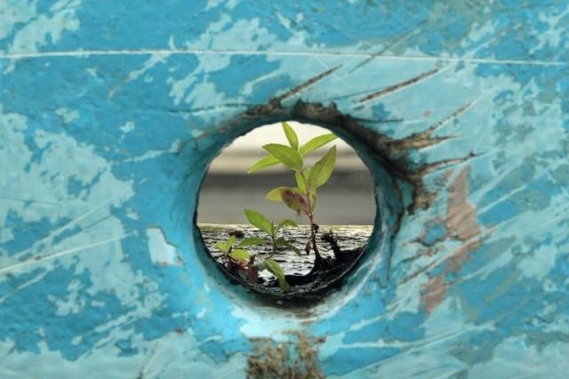 Figurativamente, a resiliência seria como uma flor desabrochar em meio a um ambiente impróprio para seu crescimento.