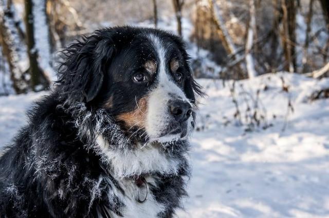 Revista faz lista dos cachorros mais fofos das artistas.