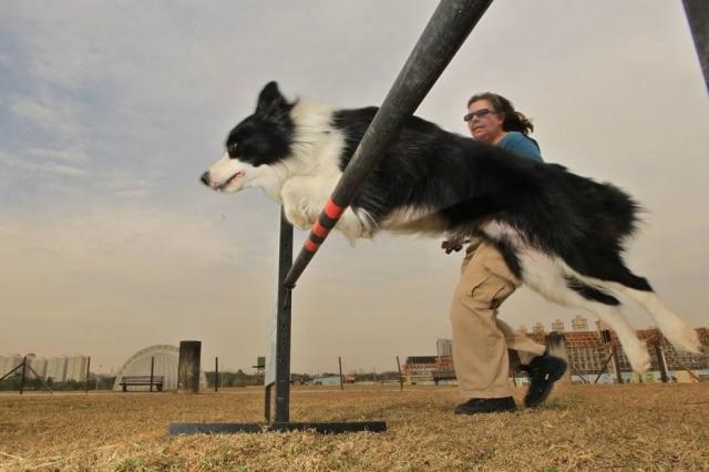 Reforço positivo é o segredo para ensinar cães a aprenderem truques