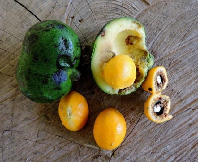 A fruta e suas mil e uma utilidades.