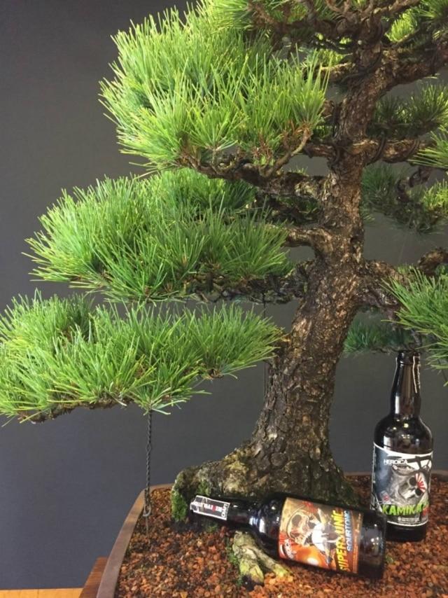 Em Jundiaí, o resultado da poda de bonsais centenários vão para a panela virar cerveja