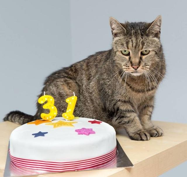 Nutmeg no aniversário de 31 anos.