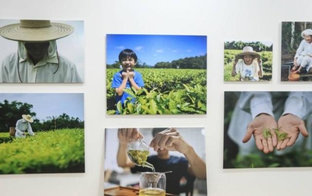 Fotos da produção do chá, expostas na casa