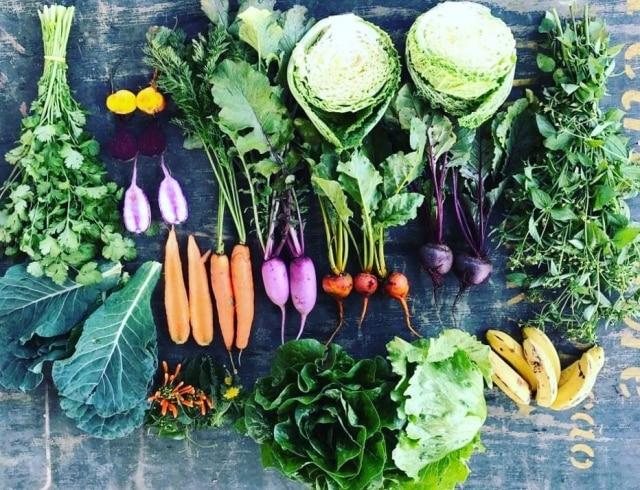Alimentos cultivados na Fazenda Santa Adelaide