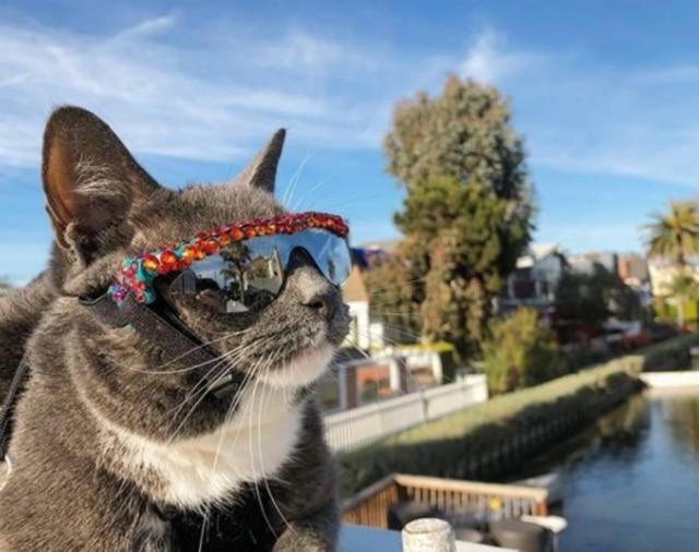 Gata Bagel precisa de óculos de sol para sair de casa pois nasceu sem as pálpebras.