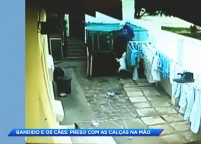 Homem tenta roubar casa, mas é impedido por cachorros.