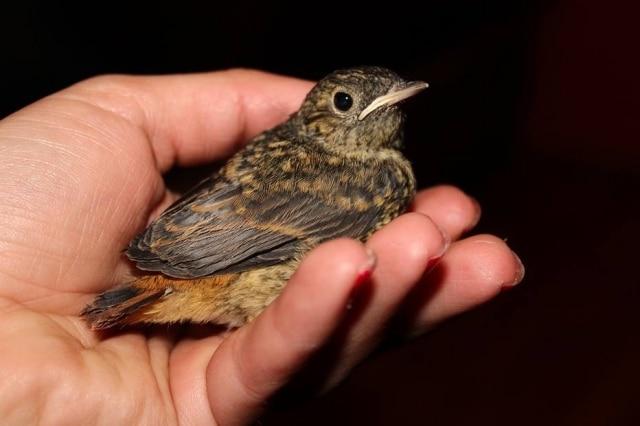 Mais vale um pássaro na mão do que dois voando?