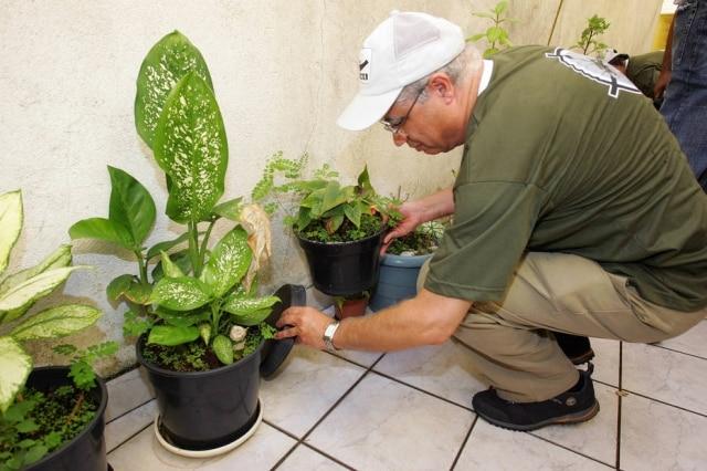 Combate à dengue envolve verificar água parada em vasos, redução do lixo, uso de repelente e inseticidas.