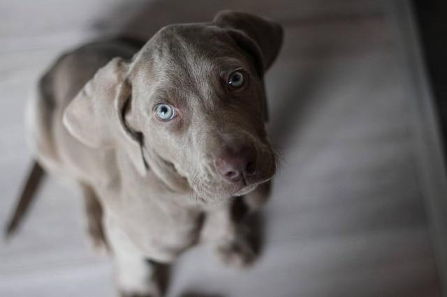Fique atento aos sinais e, se seu cão parecer doente, leve-o ao veterinário o mais rápido possível