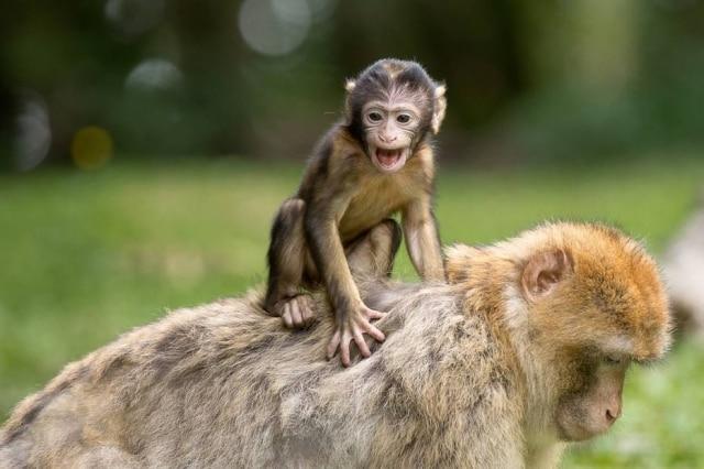 Bebê macaco tentou acordar sua mãe, mas ela não reagiu.