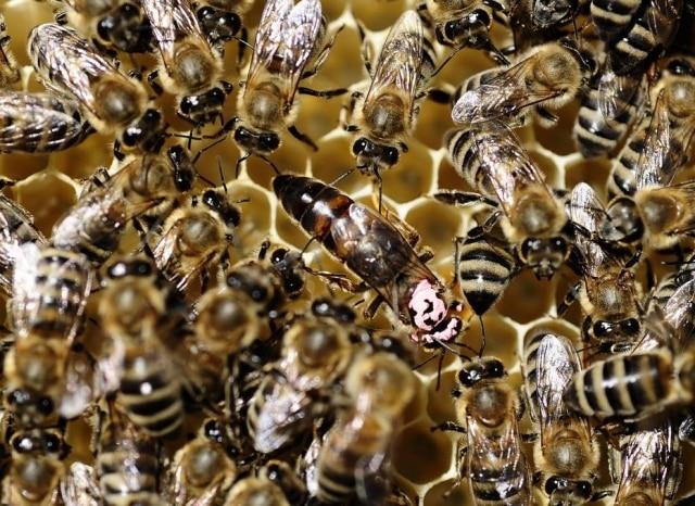 Exposição Planeta Inseto reúne informações sobre abelhas, formigas, baratas e outros insetos