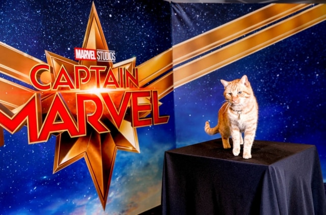 O gato Reggie, que 'interpreta' Goose em 'Capitã Marvel'.