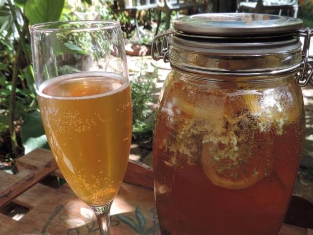Kombucha de mate e sabor flor de sabugueiro