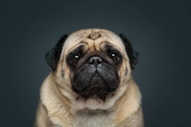 'The Dog Show' é uma série de fotografias feitas pelo casal de fotógrafos russosAlexander Khokhlov e Veronica Ershova.