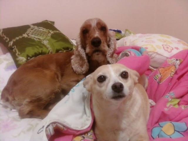 Cachorros podem sofrer ao ter de dividir atenção com outro pet.