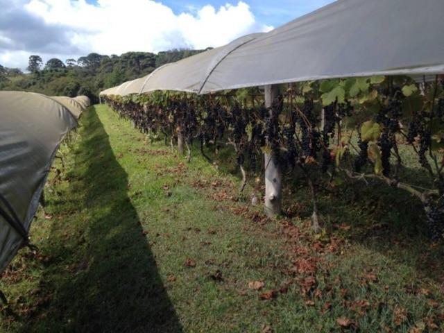 Vinícola Entre Vilas, em Espírito Santo do Pinhal (SP)