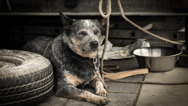 Cachorros costumam ficar mais quietos e têm menos energia para correr e brincar