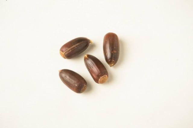 Espécie de castanha, com jeito de pinhão, a bellota é o fruto de azinheiro e do sobreiro, muito calórica e rica em ácidos oleicos.