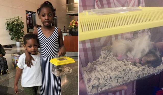 Serenity ganhou o hamster mesmo após a carta ter sido enviada para a empresa errada.