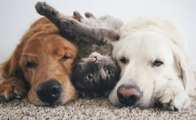 Watson, Kiko e Harry são inseparáveis