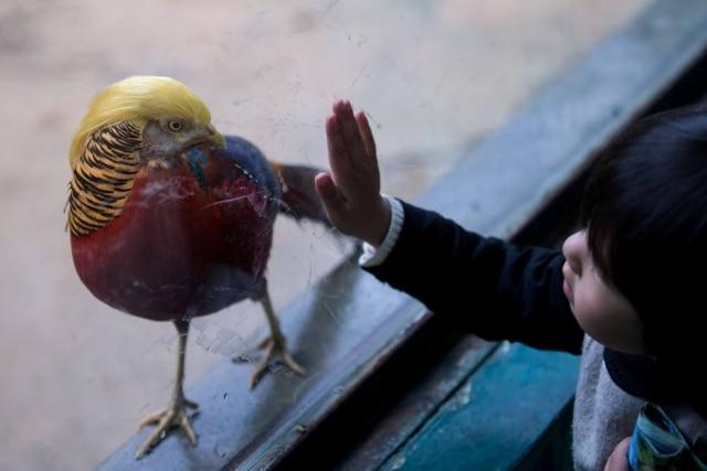 Bicho está chamando a atenção em zoo