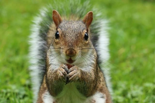 Mais uma vez, um esquilo é visto roubando – no caso mais recente, o animal furtou um donut de um policial.