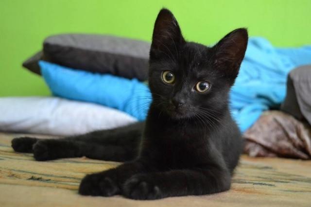 Superstição teve origem na Idade Média, quando se acreditava que os felinos tinham pacto com o demônio.
