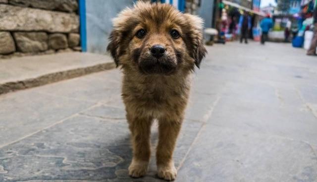 Ação garantirá doação de alimento para cães de pessoas em situação de rua por pelo menos três meses