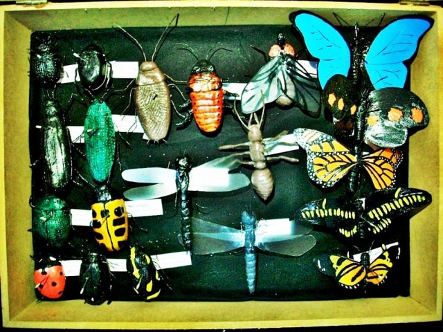 Estudantes de biologia resolveram estudar insetos com modelos feitos a mão com cerâmica fria.