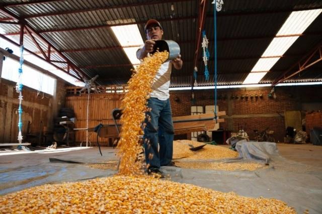 """Juan Velasco, 46: """"temos muito orgulho de que alguém do exterior queira comer o nosso milho""""."""