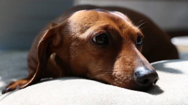 Ninguém nos ama de modo tão incondicional como os nossos pets