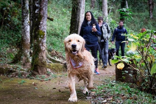No dog day use, os cachorros podem usar a piscina, fazertrilha com lago e cachoeira e têm acesso ao restaurante e deck
