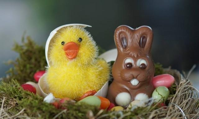 Você já se perguntou o que os ovos têm a ver com os coelhos?